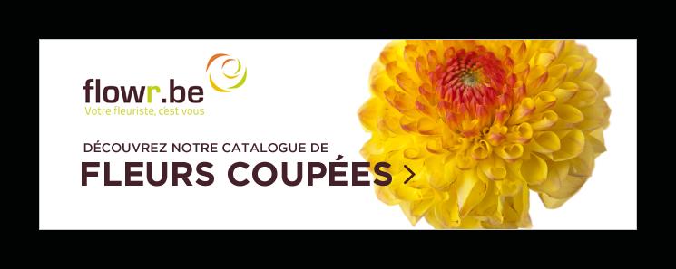 cta-flores-coupees