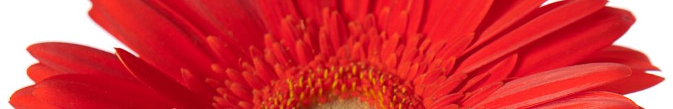 Image de un fleur rouge